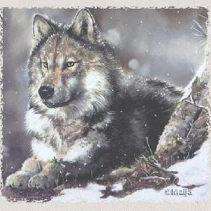 J'adore cette image de  loup