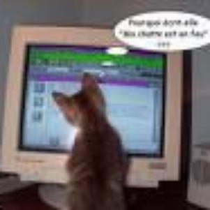 c mon chat !  il a 1 blog !