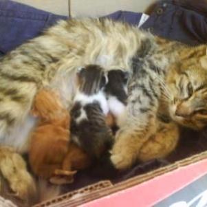 ma chatte et ces petits