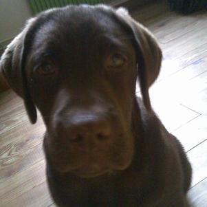 vote pour mon chien svp