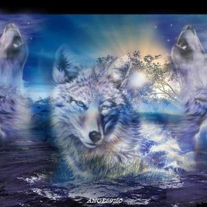 loups hurlent