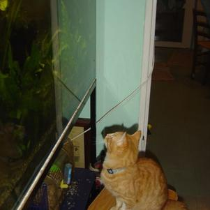 dickens à la pêche