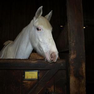 quépode le cheval de ma fille