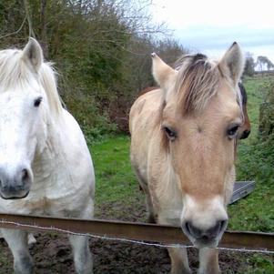 mes chevaux guida et méji