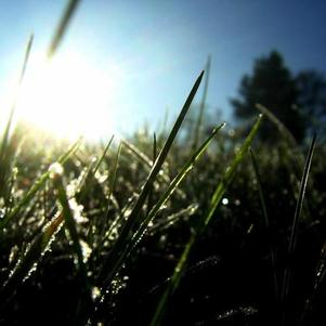 T'as jamais vu de l'herbe ?