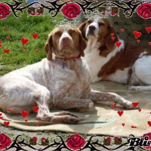 mes deux chiens