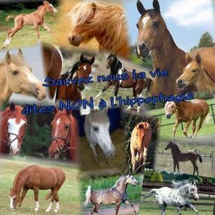 il ne faut pas manger de cheval c top nul