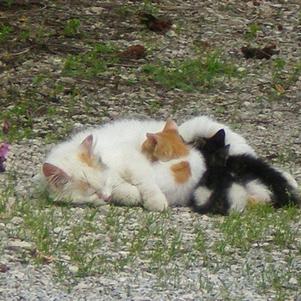 Les chatons de mon chat avec sa femme. =DD