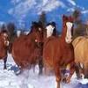 chevaux-1009