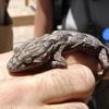 tlina-thefrog