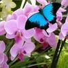 Les-Papillons26