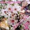 sakura-uchiwa-fics-3