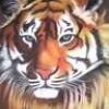 les-dessins-du-tigre