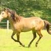 chevaux-chute