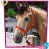x-i-love-cheval-x