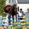 chevaux-arabes93