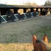 j0urnal-equestre