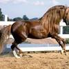 i-love-horse-44140