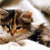 Kittykelly96
