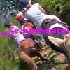 Les-ecuries-du-bouscarou
