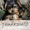 tamarina93