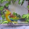 oiseau23