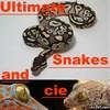 Ultimate-Snake