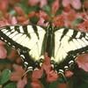 la-mariposa