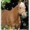bere-pony