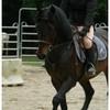 pferd-ily
