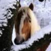 myhorse16