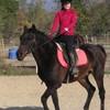 poney-chevaux-que-j-aime