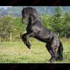 o0horse-dream-4ever0o
