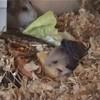 hamster-du-06