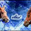 HorseForum