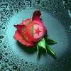 X--iicii-Algeriienne--X