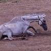 povre-chevaux