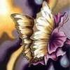 butterflyzone