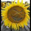 o-flower-o