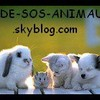 AIDE-SOS-ANIMAUX