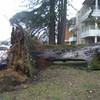tempete25janvier2009