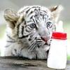 tigresss06
