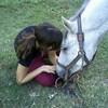 cavalli-in-festa