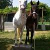 cheval-trio2