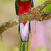 quetzal05