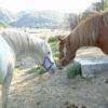 horse-girls555