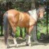 fan-2-cheval