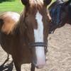 cheval--pasion
