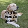 le-plus-beau-golden