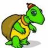 petite-tortue07